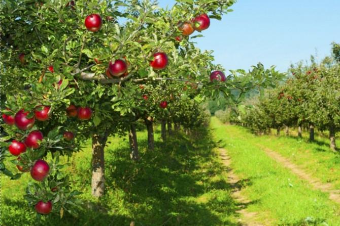 фотообои фруктовый сад