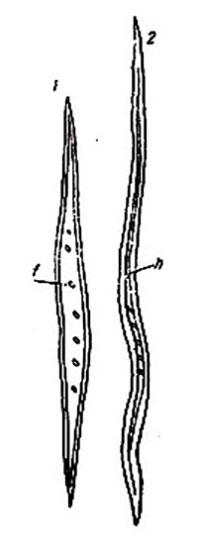 особенности микроструктуры древесины