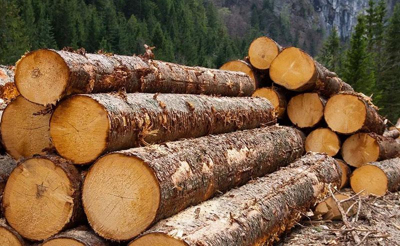 лес кругляк фото