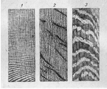 лиственные и хвойные породы древесины
