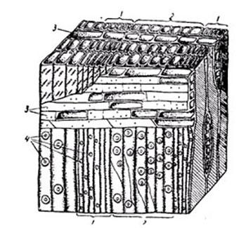 особенности строения клеток древесины