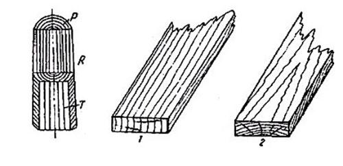 внутреннее строение древесины