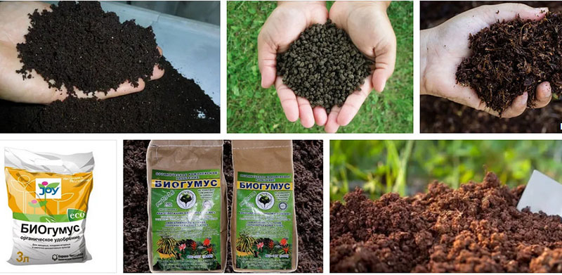 какие удобрения лучше органические или минеральные