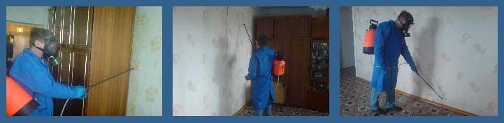 очищение зданий от насекомых