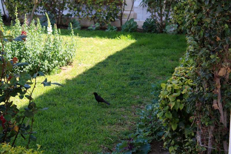 обустройство двора, озеленение участка