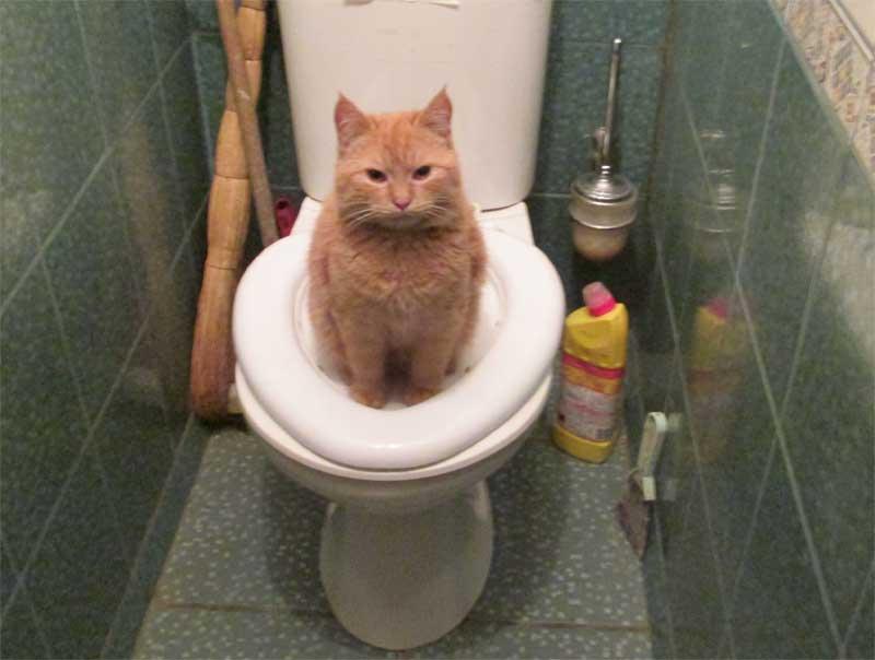 Фото кота на унитазе