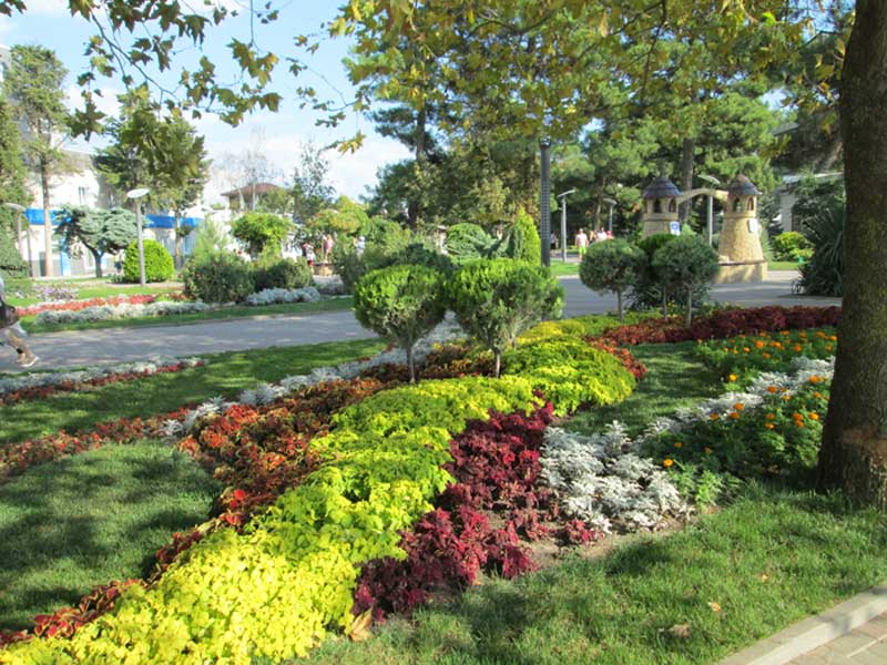 выбор декоративно-цветущих растений для участка