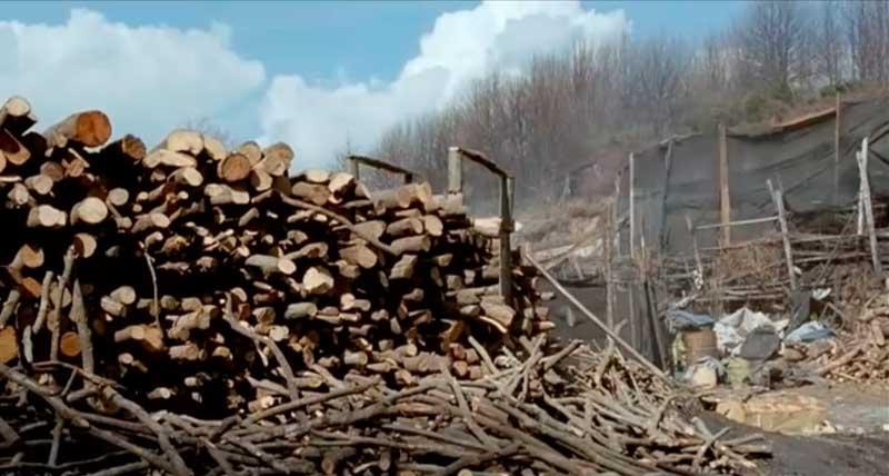 сырье для производства угля из дерева