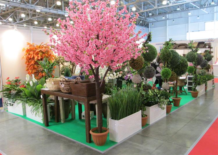 фото растения для дома