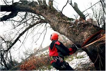 удаление, рубка деревьев
