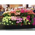 Фото букетов цветов, художественных экспозиций